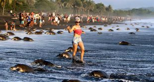 """""""Turtle-Watching""""in Costa Rica"""
