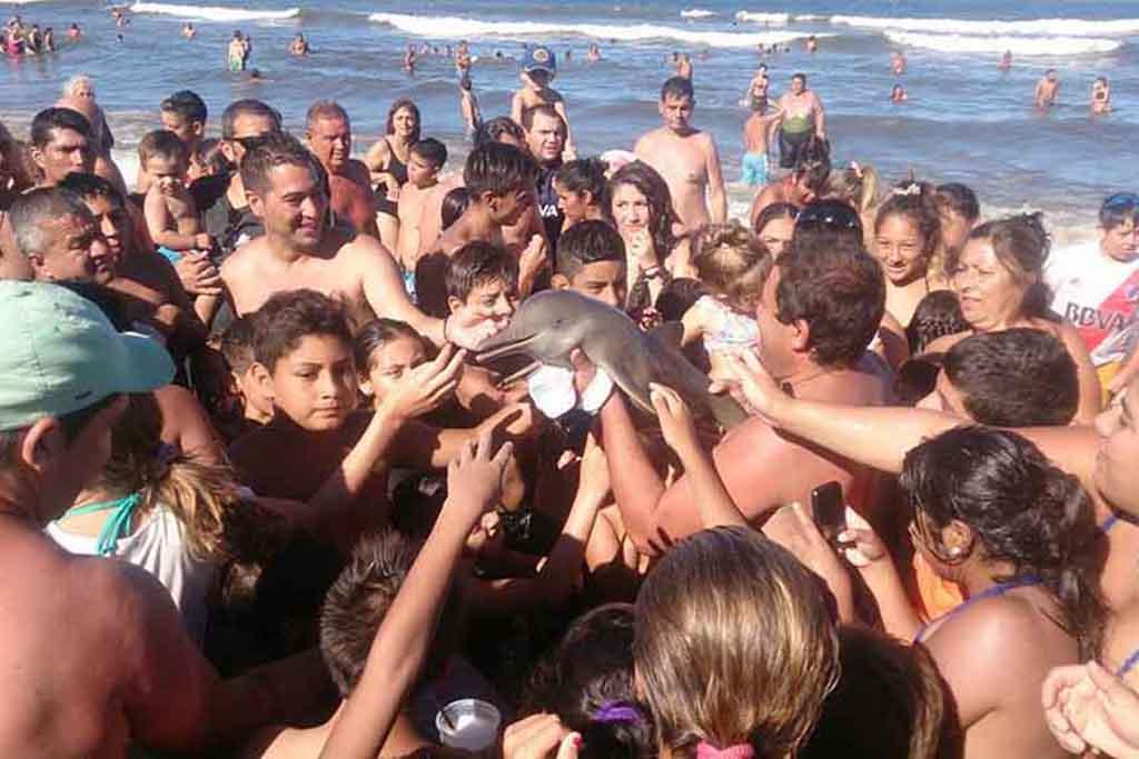 Schaulustige Urlauber streicheln einen Baby-Delphin bis er vertrocknet ist