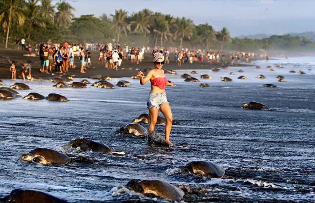 """Costa Rica: Touristen blockieren während der Brutzeit die Nester der Schildkröten beim """"Turtle-Watching"""""""
