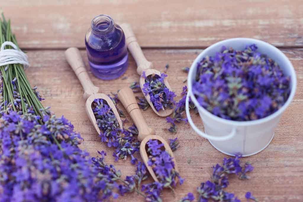 Die ätherischen Öle des Lavendels helfen bei Venenproblemen