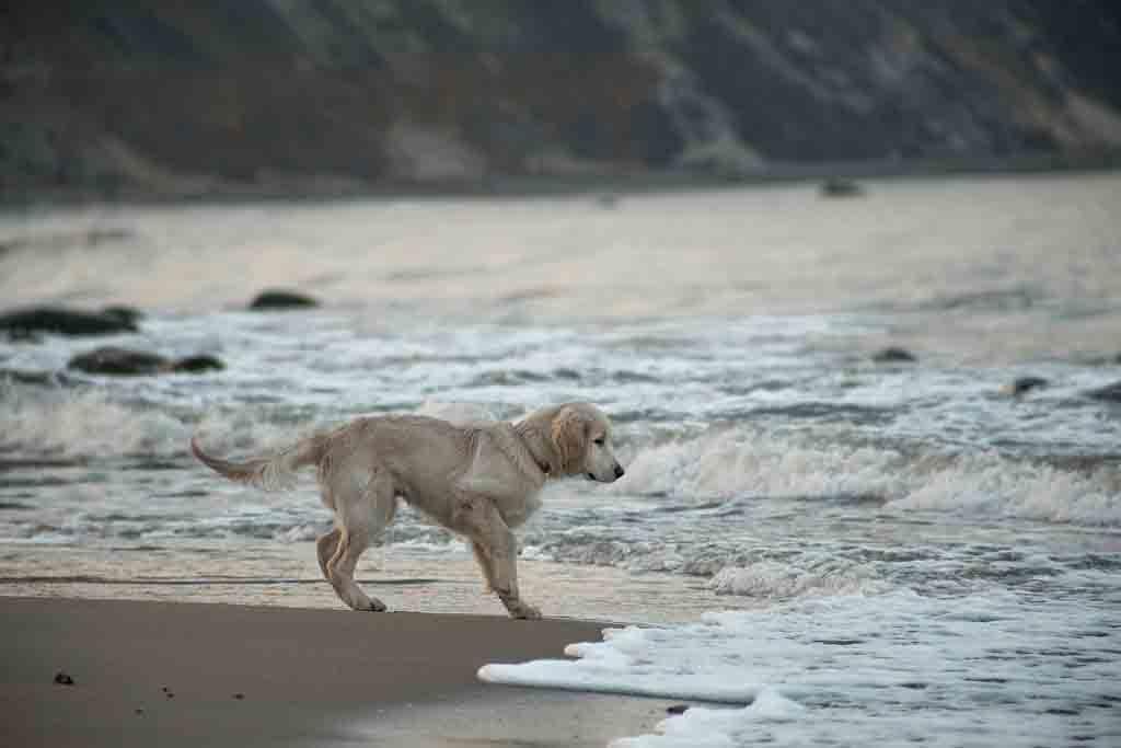 Am Fischerstrand in Binz kann man Hunde frei laufen lassen