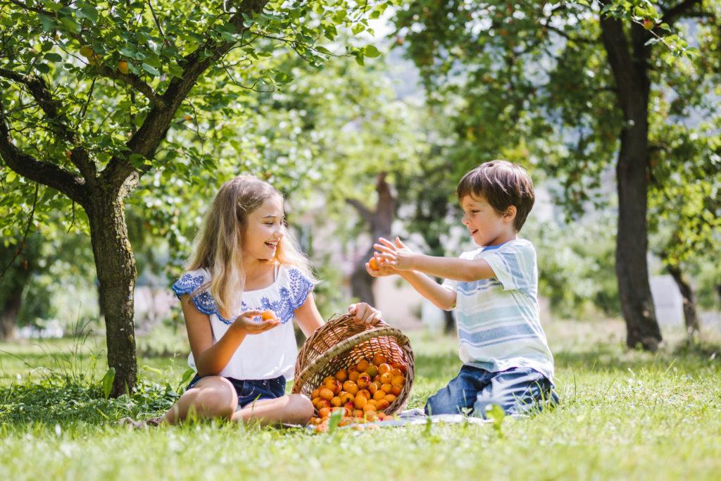 Marillen aus der Wachau schmecken auch den Kleinen Foto: Niederösterreich Werbung/ Stefan Fuertbauer