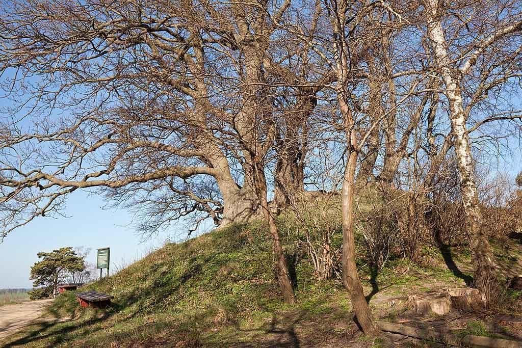 Das Hügelgrab Speckbusch