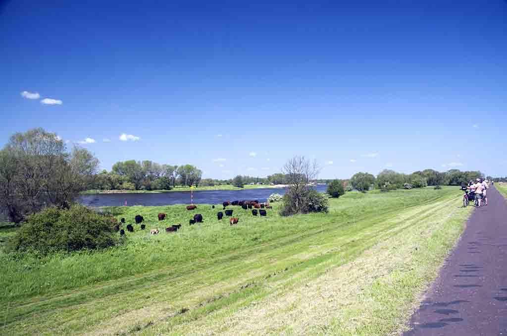 Bei Aktiveurlaubern sehr beliebt, Radtouren und Wanderreisen am Elberadweg rund um Meißen