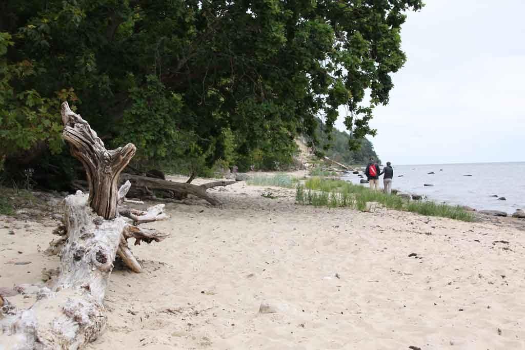 Der Südstrand von Göhren ist ideal für Wanderungen und Hundebesitzer