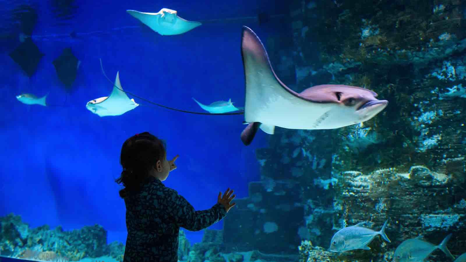 Im Sea Life München kannst du in eine besondere Unterwasserwelt eintauchen