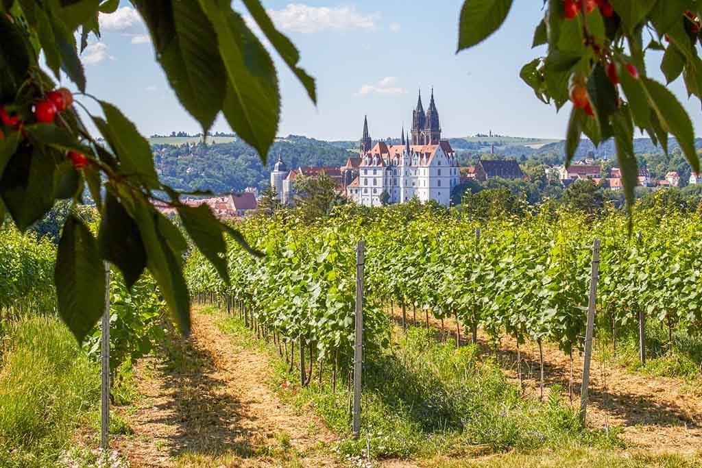 Weingut in Sachsen am Südhang der Elbe mit herrlichem Blick auf die Albrechtsburg und den Dom von Meiße