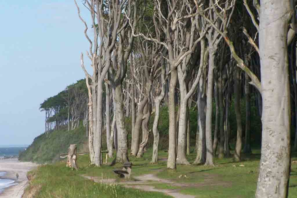 Der geheimnisvollen Gespensterwald