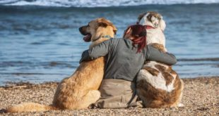 hund-urlaub